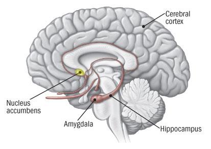 nucleo-percepcion