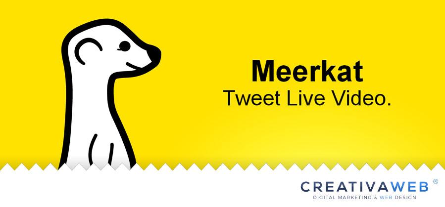 meerkat-tweet-live-video